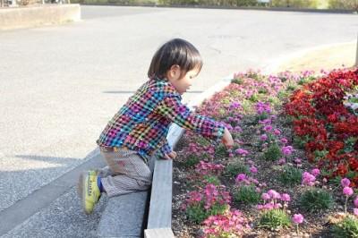 市民ミュージアム前の花畑