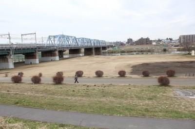 多摩川を渡って新幹線が通る