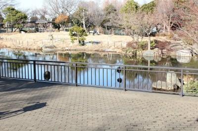 等々力緑地の池
