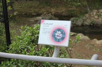 生田緑地かおりの園カード