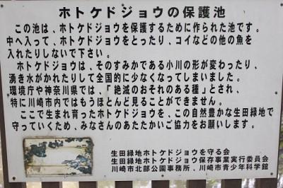 生田緑地ホトケドジョウ