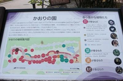 生田緑地かおりの園地図