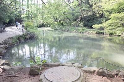 生田緑地池