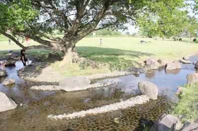 せせらぎ公園-水遊び小川カーブ