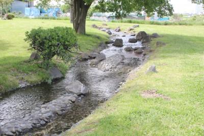 せせらぎ公園-小川