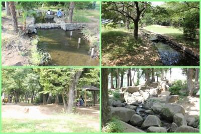 稲田公園-自然