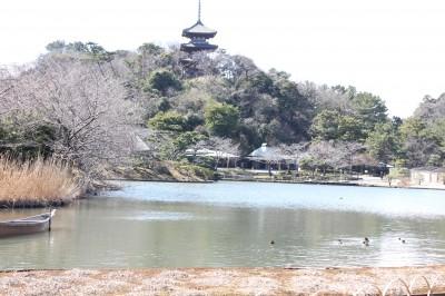 三溪園-池