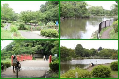 こども自然公園-自然風景