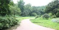 自然豊かな三ツ池公園の遊歩道