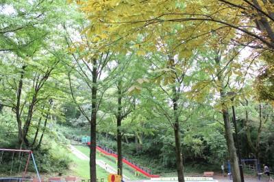 児童遊園地-遊具広場の木々