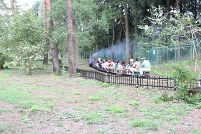 木々の中を走るミニ列車