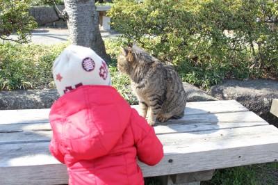 三溪園-猫に話しかける2歳児