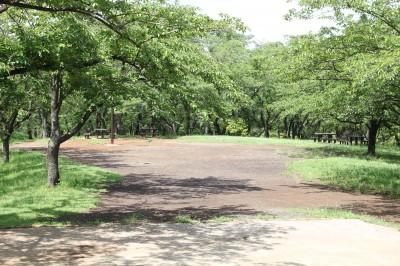 こども自然公園-桜山頂上