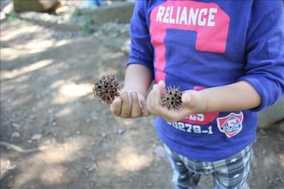 チクチクの実を拾う2歳児-岸根公園