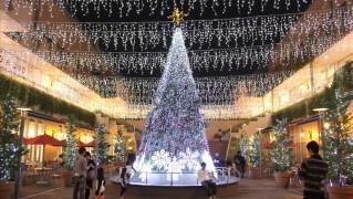 トレッサ横浜豪華で綺麗なリスマスツリー