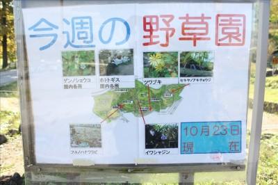 荻野公園の多種に渡る野草園