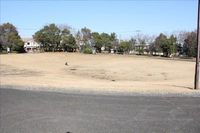 大きく円形な芝生広場