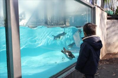ペンギンが泳いでます。