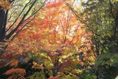 紅葉が綺麗です。