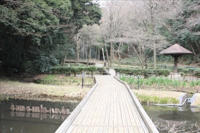 湿生植物園の様子