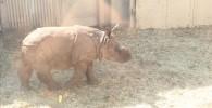 インドサイ-金沢動物園