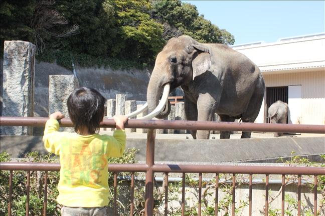 ゾウを見学する3歳児