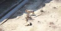 マーラ-金沢動物園