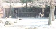 カンガルーゾーン-金沢動物園
