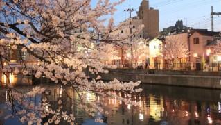 大岡川に映るネオンと桜