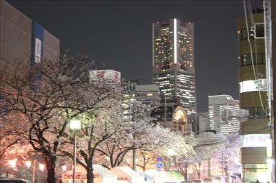 夜のランドマークと桜2014年