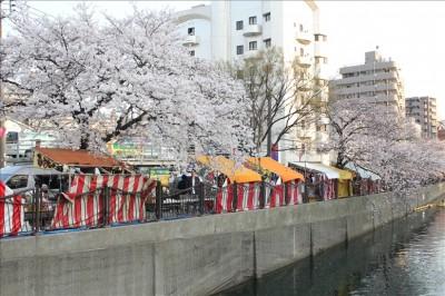 大岡川沿いの桜並木と屋台