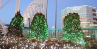 木に電飾。夕方の景色