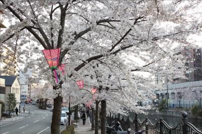 伊勢佐木町の道路と桜並木