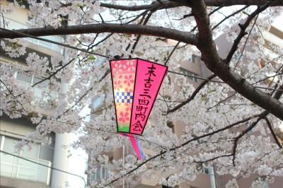 桜とちょうちん
