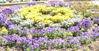 黄色と紫と白のグラデーションが鮮やかな大花壇