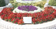 赤と紫と白のグラデーションが美しい大花壇