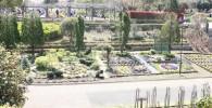 麻溝公園・花の谷の写真