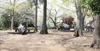 麻溝公園・樹林広場の写真