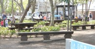 樹林広場の様子。ベンチがたくさん