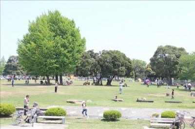 大きな木と芝生広場