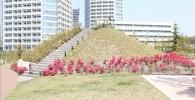 富士見台の小山。バックにニコタマのマンションが写っています。