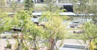いこいの広場から見える日本庭園