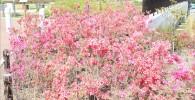 富士見台エリアのピンクのお花