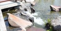 せせらぎから池へ水が流れる様子