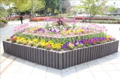 保土ヶ谷公園噴水広場前の花壇・チューリップが綺麗