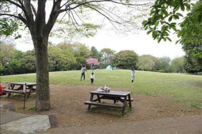 芝生のピクニック広場