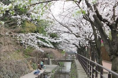 中原平和公園の川と桜