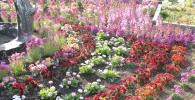 季節ごとに植え替えられる花壇のお花