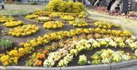 市民ミュージアム前の手入れが行き届いた美しい花壇