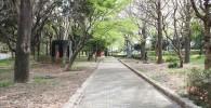 木々の囲まれた遊歩道